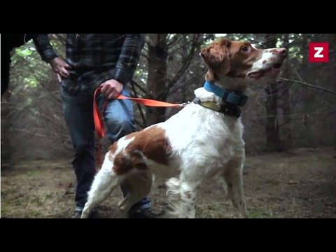 On the hunt: dogs find truffles in oregon - zagat documentaries, episode 17