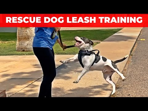 How do i get my rescue dog to walk on a leash