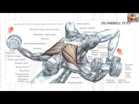 Bodybuilding exercises/ best chest workouts for mass